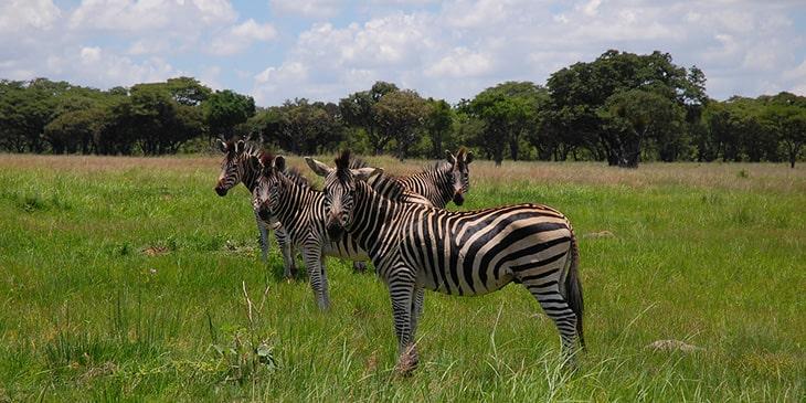 Cheap Flights To Harare Brightsun Travel India